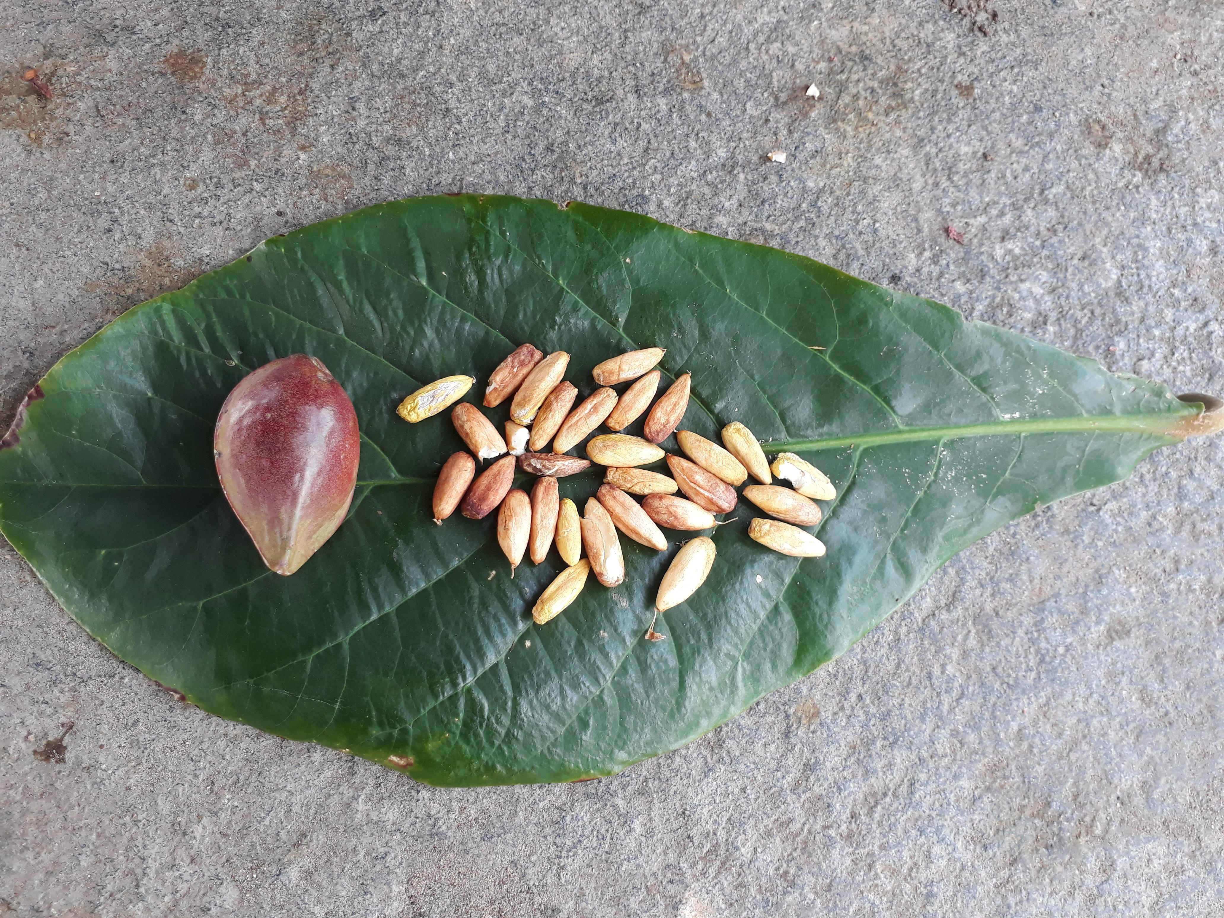 kalanipoo indian almond adal parupu