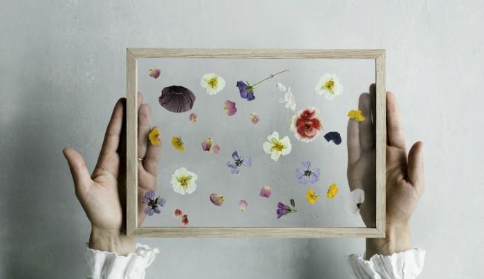 kalanipoo dryflower